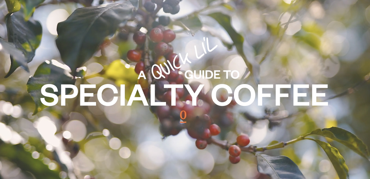 Photograph of coffee cherry's on tree and the Single O logo